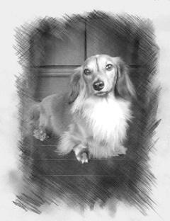 お客様の愛犬の写真
